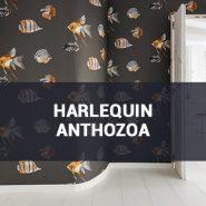 Обои Harlequin Anthozoa фото