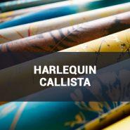 Обои Harlequin Callista фото