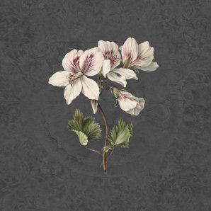 Панно Rasch Textil Vanilla Lime 014276 фото